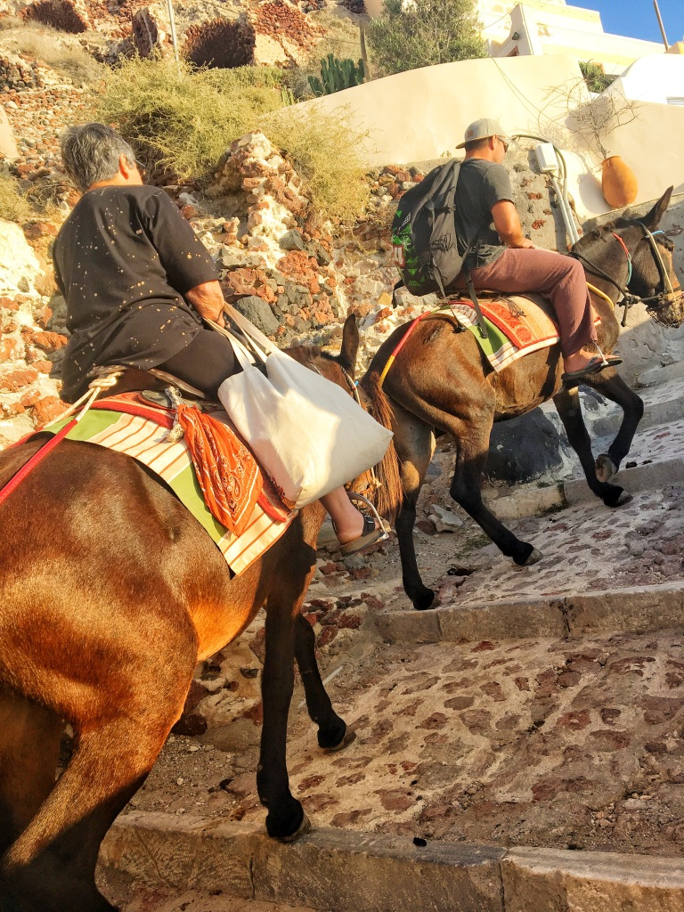 Donkeys down to Ammoudi Bay