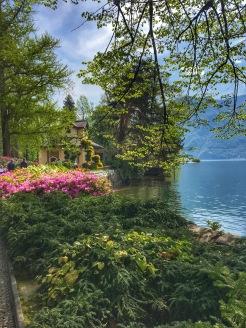 greenery in Lugano