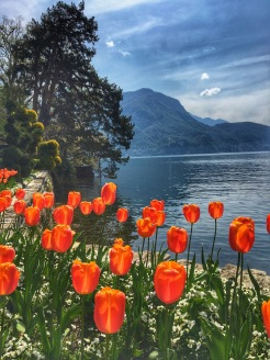 tulips in Lugano