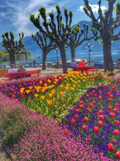 flowers in Lugano