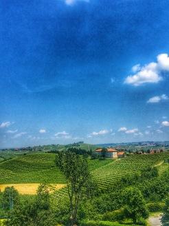 Piedmont Vineyard 10