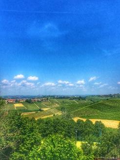Piedmont Vineyard 9