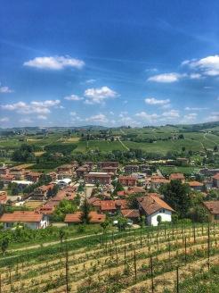 Piedmont Vineyard 8
