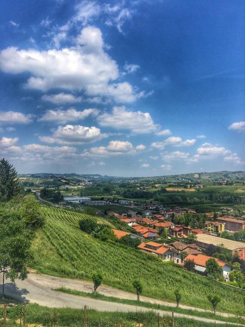 Piedmont Vineyard 6