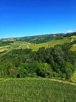 Piedmont Vineyard 7