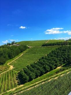 Piedmont Vineyard 3