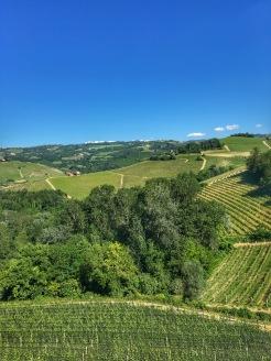 Piedmont Vineyard 1